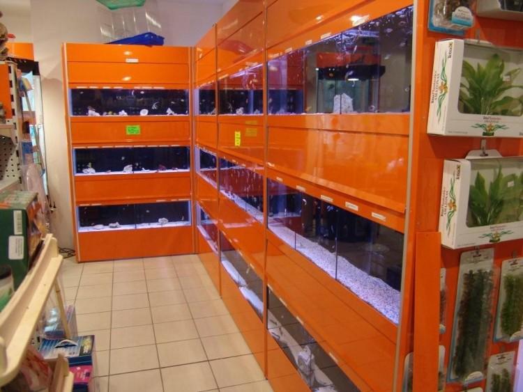 Acquari bionatura impianti arredamenti negozi animali for Arredamento acquario