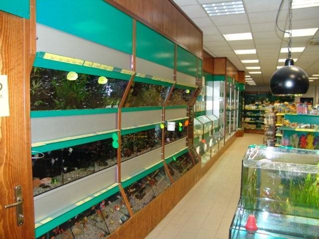 Acquari bionatura impianti arredamenti negozi animali for Arredamenti per acquari